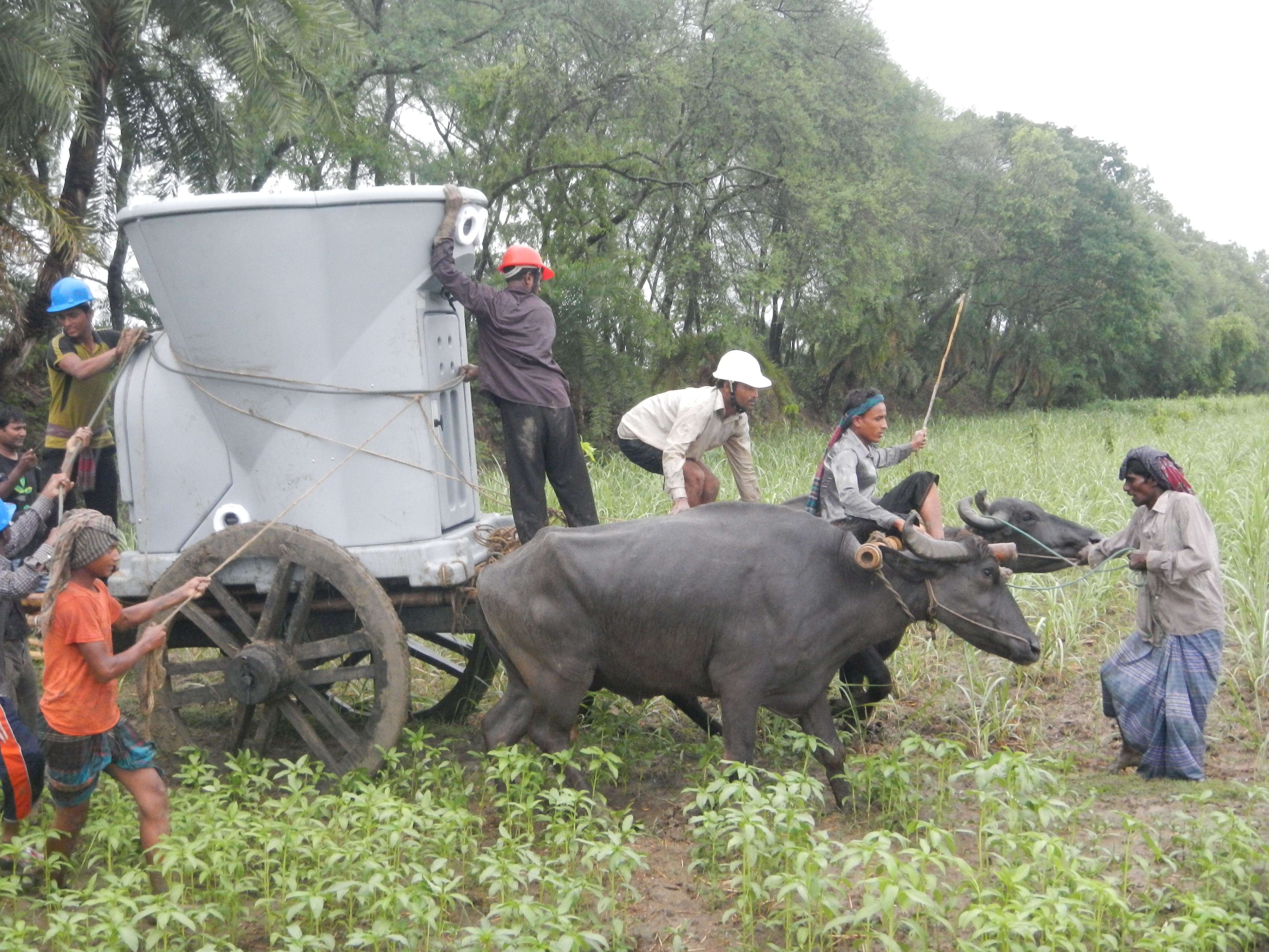 A group of people and water buffaloes transport a large meteorological instrument in a rice paddy.