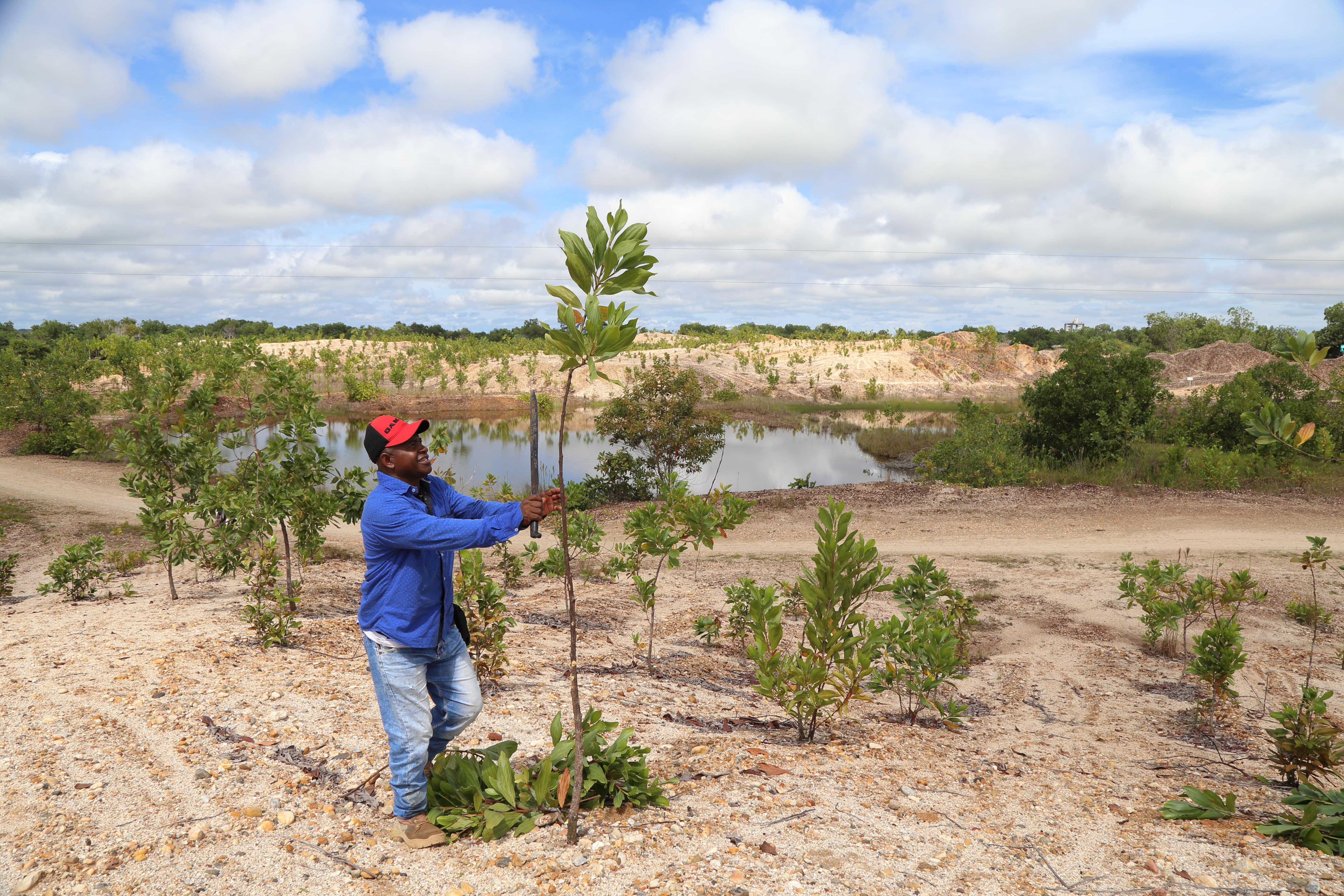 A man plants a thin tree in a semi-arid environment.