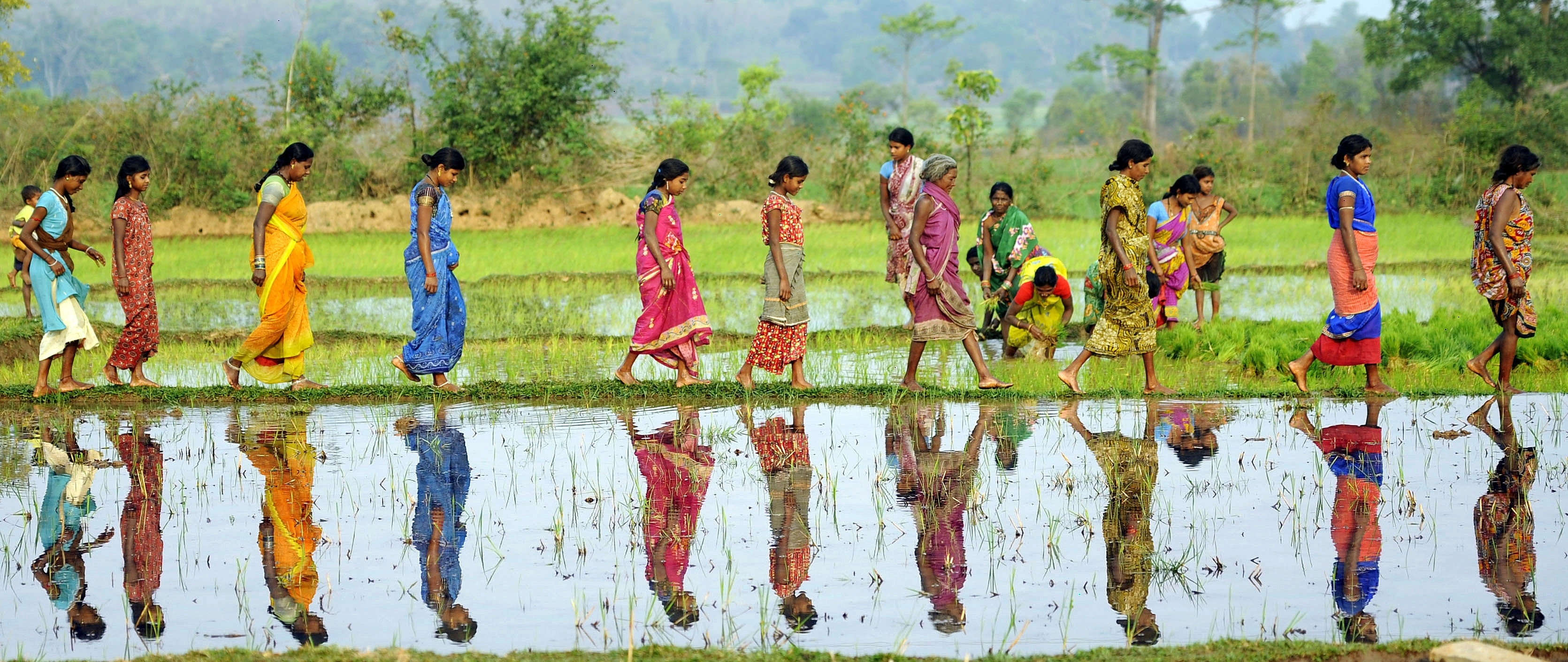 Women Walking Across Rice Paddy in India