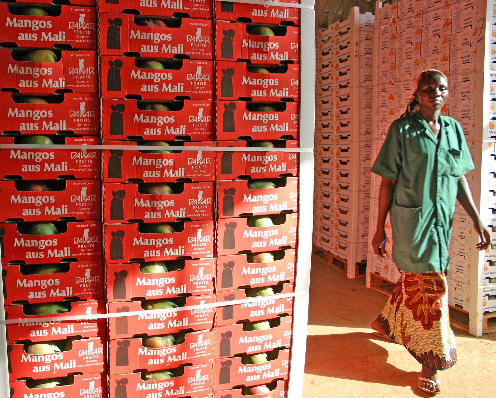 AOM Mango Processing Plant - Mali/ Value Chains
