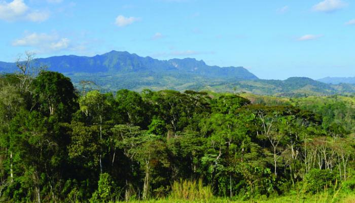 Central American jungle with mountains in background