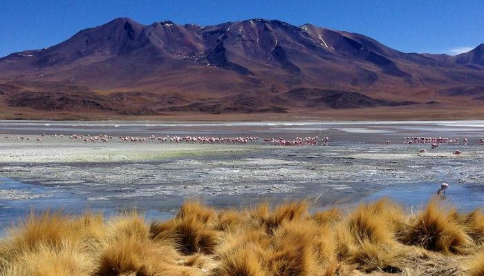Flamingos stand in a mostly dry lake bed with an arid mountain behind them.