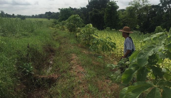 Farmers working with a new association in Magway, Myanmar, are learning how to adapt to climate change and extreme weahter by using water conservation and agroforesty practices.