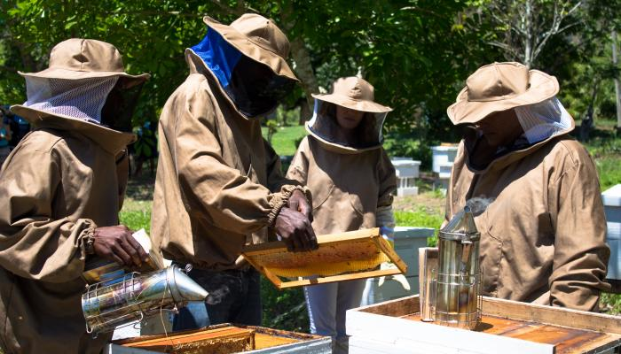 Four beekeepers open up hives and examine the honeycomb inside.