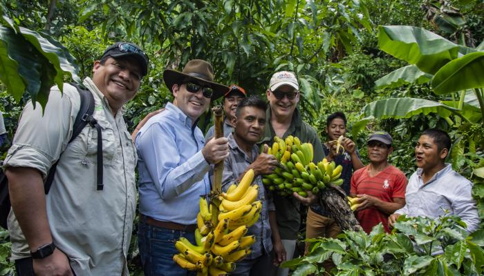 A group of people stand among coffee and banana plants, and two of the people hold bunches of bananas up for the camera.