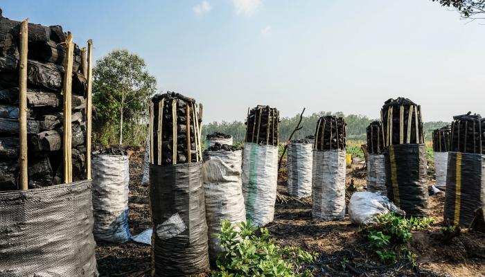 Cylindrical stacks of charcoal stand in a field.