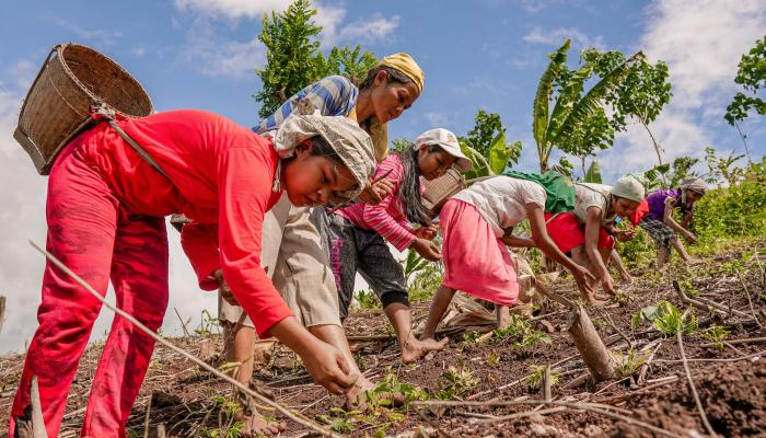 Philippine indigenous women farmers planting upland rice