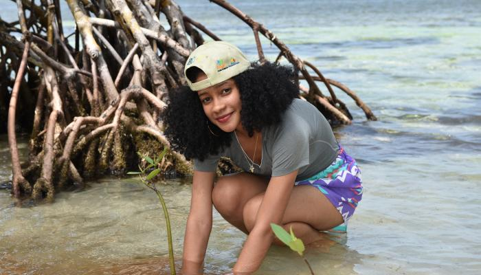 A woman kneels on a sandy beach to plant a young mangrove tree.