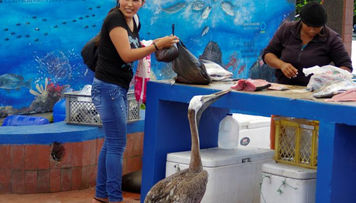 A woman and a fishmonger conduct a transaction while, just next to them, a pelican sneaks in to steal to a large slab of fish meat.