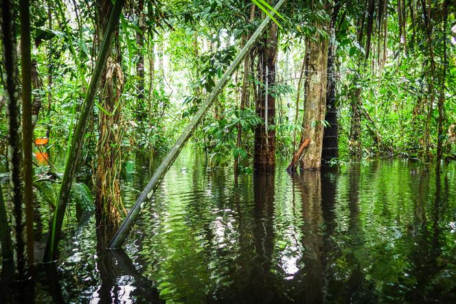 Flooded palm swamp peatland in Peru.