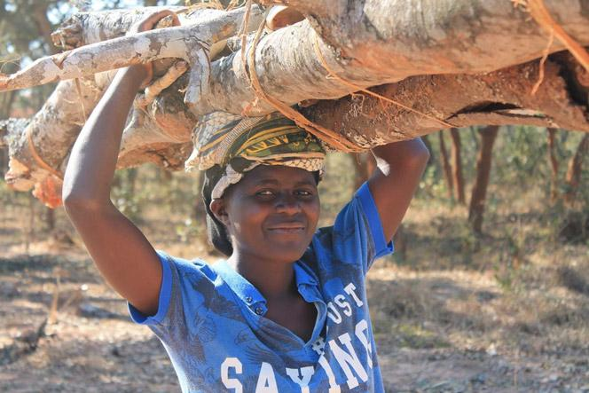 In Malawi, women and girls typically collect firewood for household use. As forest resources decline, they are compelled to walk longer distances to find their energy source and this denies them of opportunities to spend more time with families and attend school.