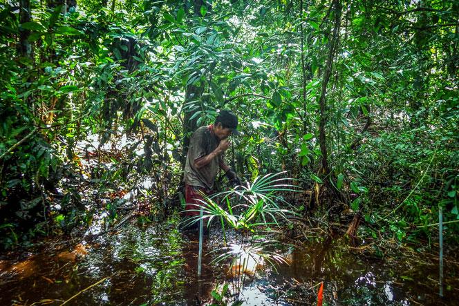 Installation of experiment for measuring soil greenhouse gas fluxes in a palm peat swamp forest.