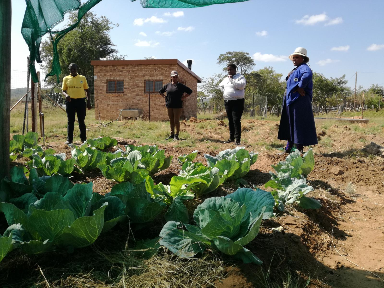 Four people stand near a small farm plot filled with cabbage plants.