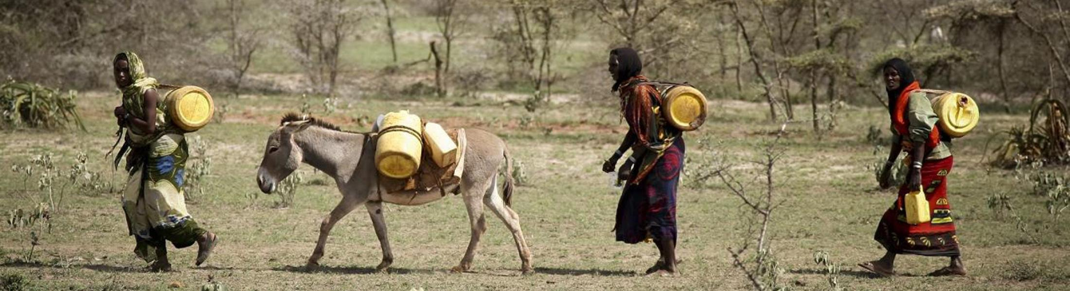 3 women and one donkey walk from right to left, carrying large yellow jugs of water on their backs.