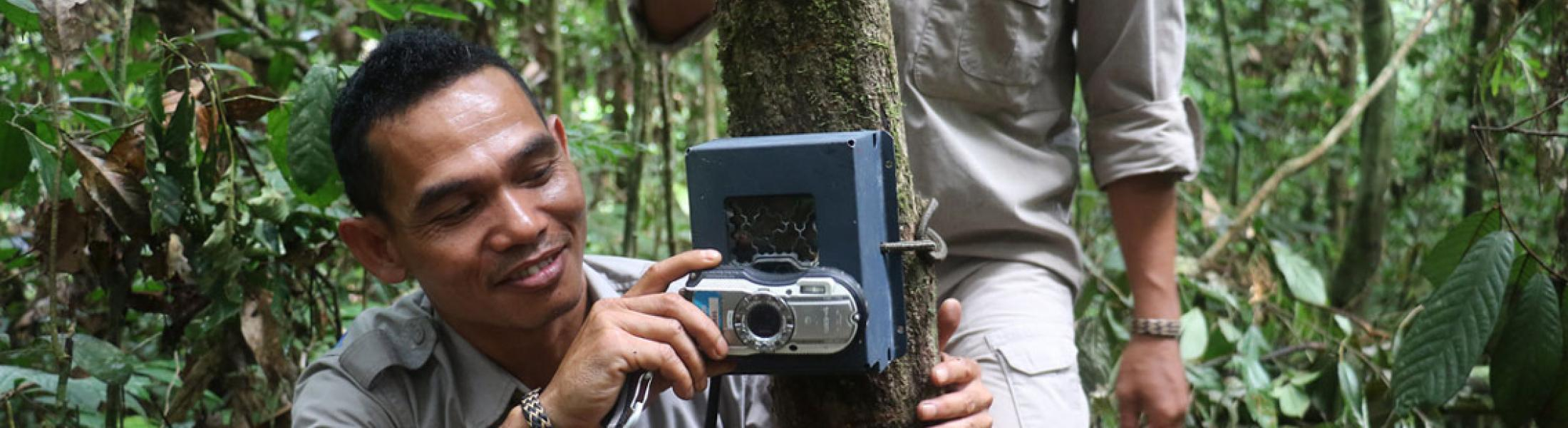 A man adjusts a wildlife camera in a dense jungle.