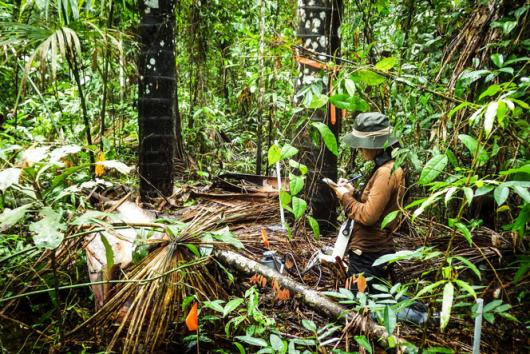 Monitoring soil greenhouse gas fluxes in a palm swamp peatland.
