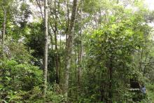 Forest restoration Thailand photo