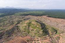 This aerial shot shows rainforest felled