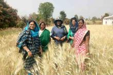 A group of women stands in a field of wheat.