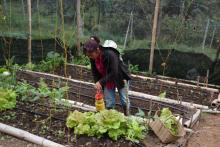 Climate-smart Cauca village, Colombia