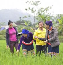 Agriculture projects such as this rice cultivation project in Vietnam can benefit from analysis early in planning to determine how climate change could affect outcomes. Photo by Phuong Nguyen.
