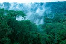 Forest in Maringa Lopori Wamba Landscape, DRC