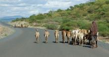 Pastoralist in Ethiopia
