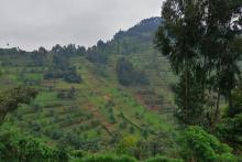 Farmland photo Kinyua