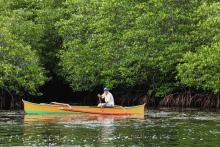 A fisher glides past a stand of mangroves in a boat.