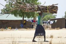 Woman carries a large bundle of firewood.