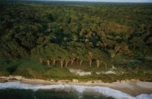 Gabon's forested coastline.