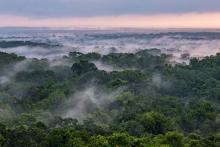 GuatemalaForest