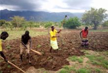 Farmers preparing fields for planting with mountain range and storm clouds in background.