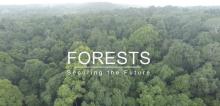 India Forest-PLUS video screenshot