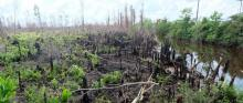 Fire destruction on peatlands.