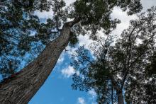 View of sky through trees at Maya Biosphere Reserve