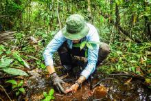 Tomando muestras de suelo en una turbera de palmeras.