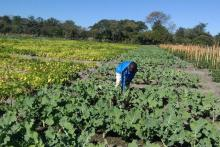 Nutrition garden Zimbabwe