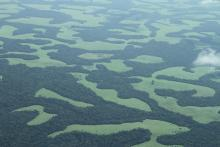 Forest Savana mosaic, DRC, as seen from the air.