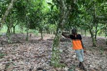 Cocoa farmer in Ghana photo
