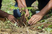 Planting tree photo