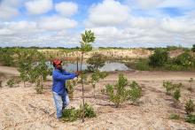 Greening the desert photo