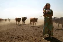 A female farmer walks with a group of cattle.