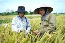 Rice farmers Vietnam photo
