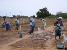 A women's vegetable garden in Senegal