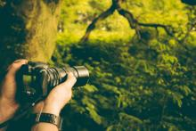 Hands holding a camera pointed towards lush green forest.