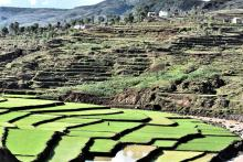 Terraced farming photo Madagascar