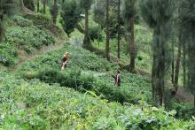 Two people standing in a green plantation in Vietnam