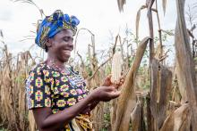 Village elder woman picks corn photo