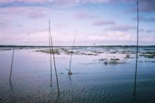 Bika Beel wetlands, Bangladesh